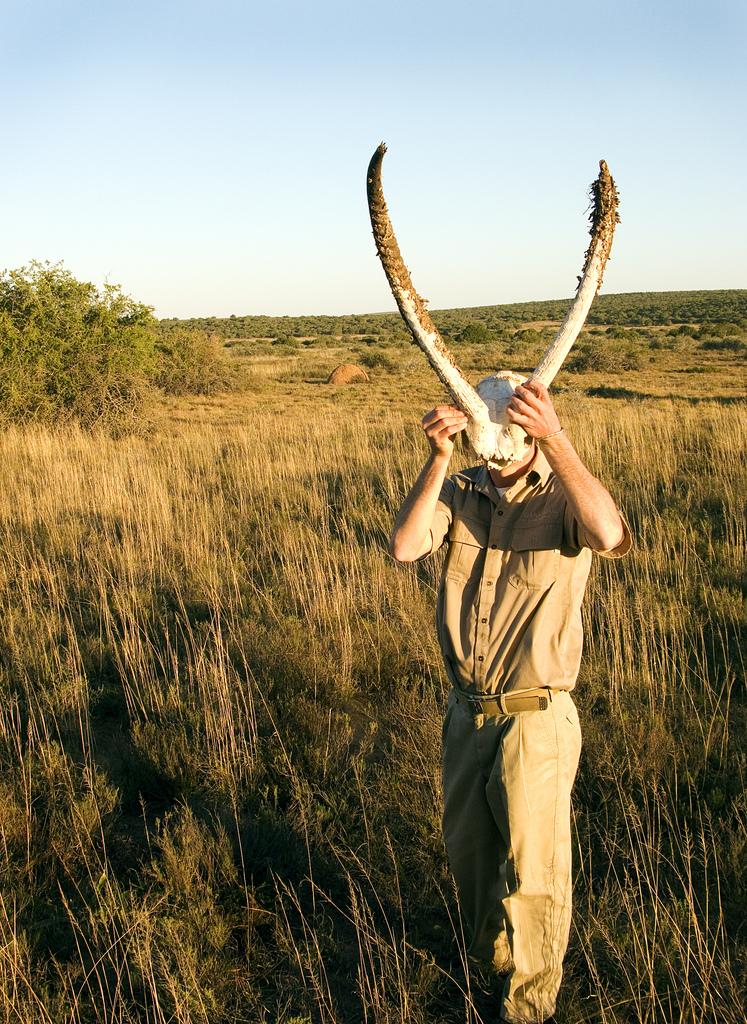 Bushbuck Horns